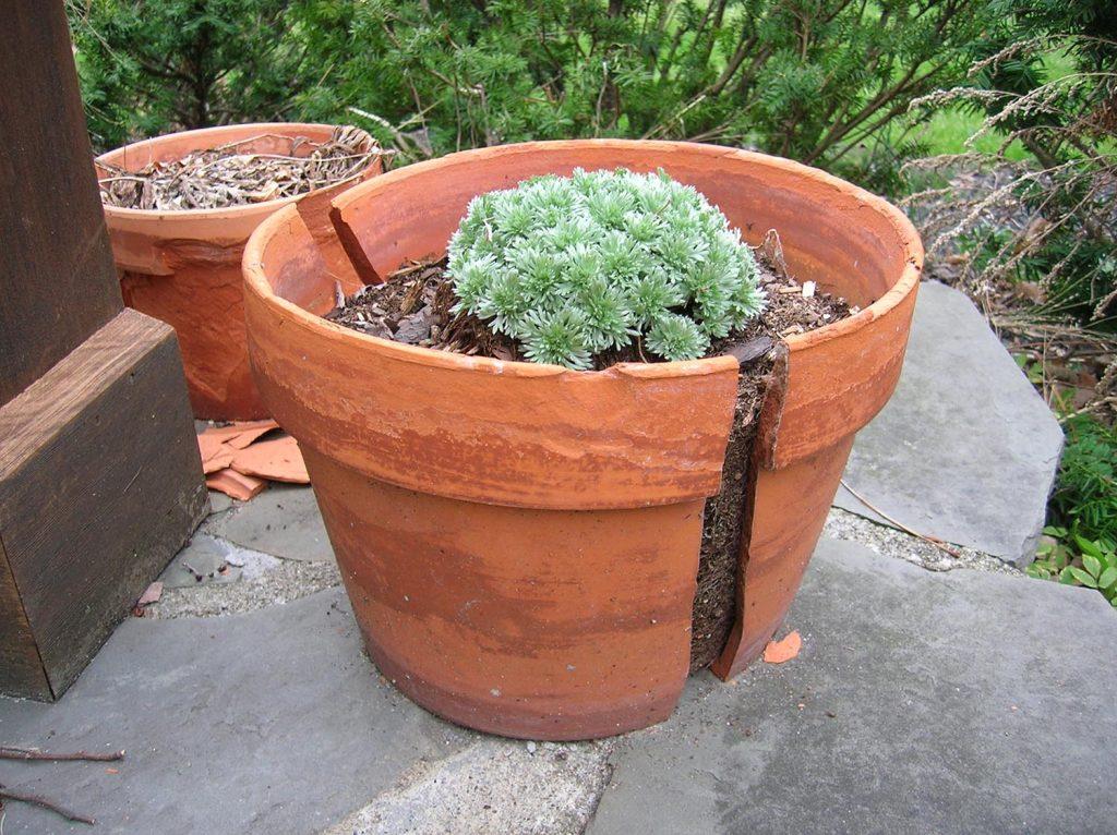 cracked flower pot