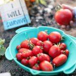 Edible vegetables for summer