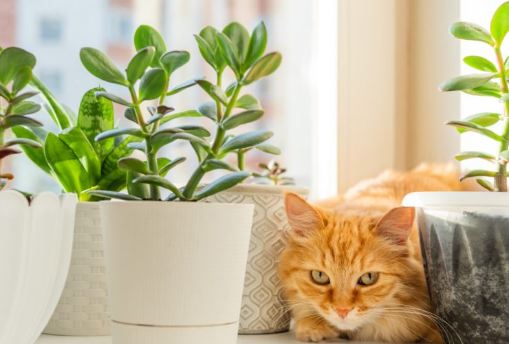 pet safe houseplants for cats and dogs